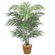 Charming Palm Tree Potted