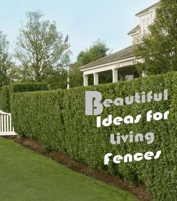Fabulous Home Ideas